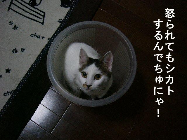 e0171996_17151439.jpg