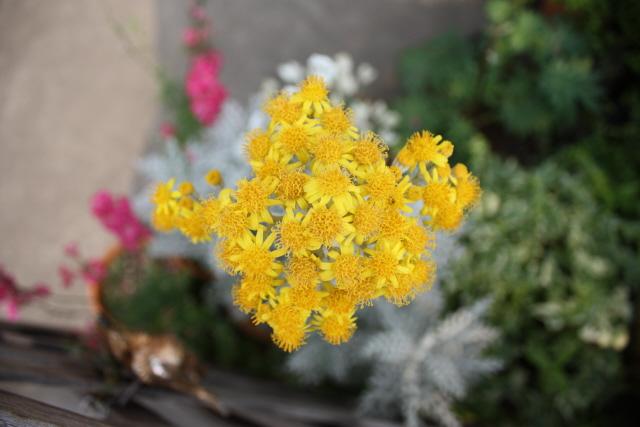 テラスの花々_c0188809_20121160.jpg