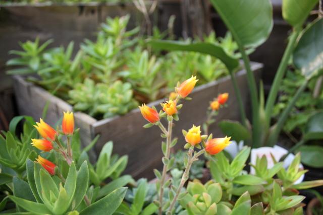 テラスの花々_c0188809_2084739.jpg