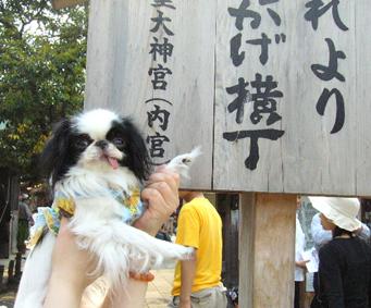 わんこと伊勢旅行!_c0199014_1111878.jpg