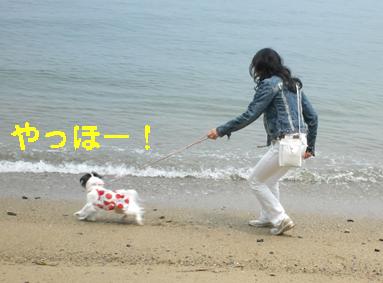 わんこと伊勢旅行!_c0199014_11221420.jpg
