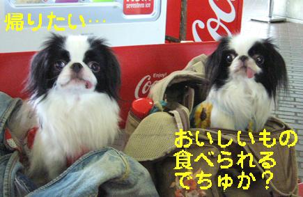 わんこと伊勢旅行!_c0199014_11252635.jpg