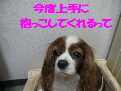 b0185323_2317664.jpg