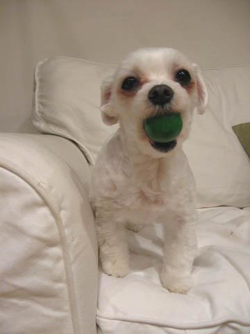 このごろの愛犬さくらのお気に入り_f0179528_185363.jpg