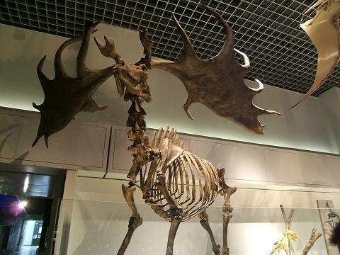 上野の国立科学博物館 その8 その他の展示_e0089232_1852021.jpg