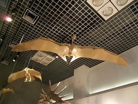 上野の国立科学博物館 その8 その他の展示_e0089232_1852819.jpg