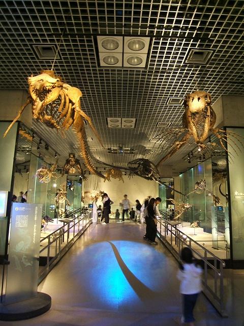 上野の国立科学博物館 その8 その他の展示_e0089232_18531817.jpg