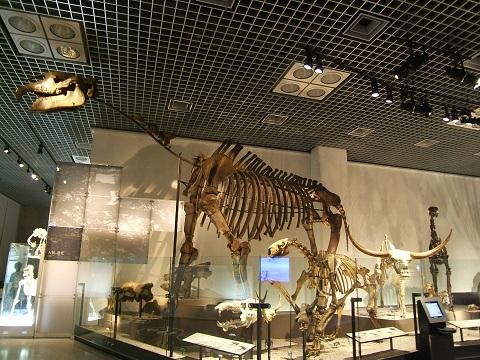 上野の国立科学博物館 その8 その他の展示_e0089232_18532495.jpg