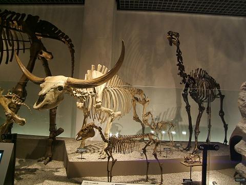 上野の国立科学博物館 その8 その他の展示_e0089232_18532992.jpg
