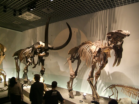 上野の国立科学博物館 その8 その他の展示_e0089232_18533654.jpg