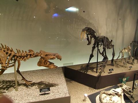 上野の国立科学博物館 その8 その他の展示_e0089232_18562083.jpg