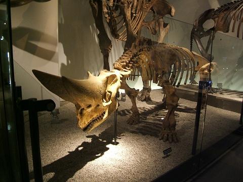 上野の国立科学博物館 その8 その他の展示_e0089232_18562665.jpg