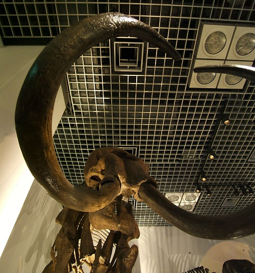 上野の国立科学博物館 その8 その他の展示_e0089232_18563695.jpg