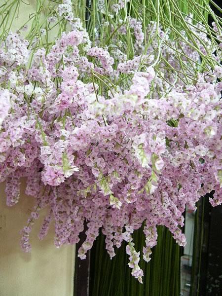花とベルクのあいだで 09/6/15_c0069047_1153962.jpg