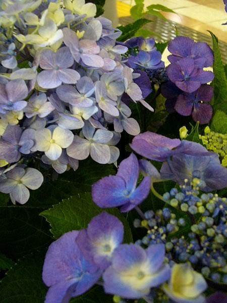 花とベルクのあいだで 09/6/15_c0069047_1505744.jpg