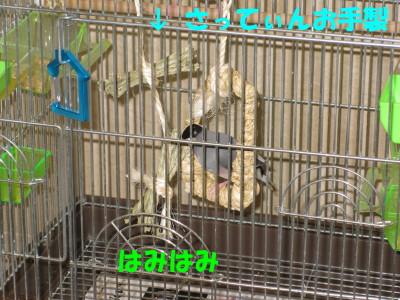 b0158061_20434488.jpg
