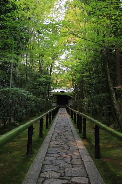 高桐院(大徳寺塔頭)_e0051888_5251528.jpg