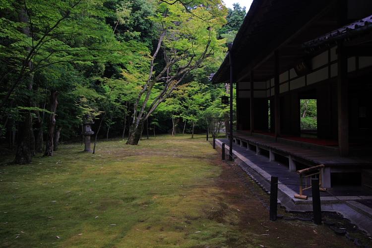 高桐院(大徳寺塔頭)_e0051888_5254118.jpg