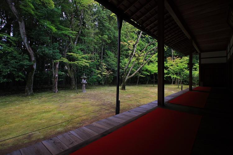 高桐院(大徳寺塔頭)_e0051888_526314.jpg