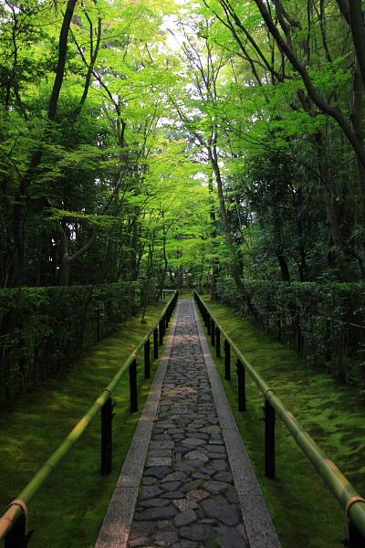 高桐院(大徳寺塔頭)_e0051888_5274175.jpg