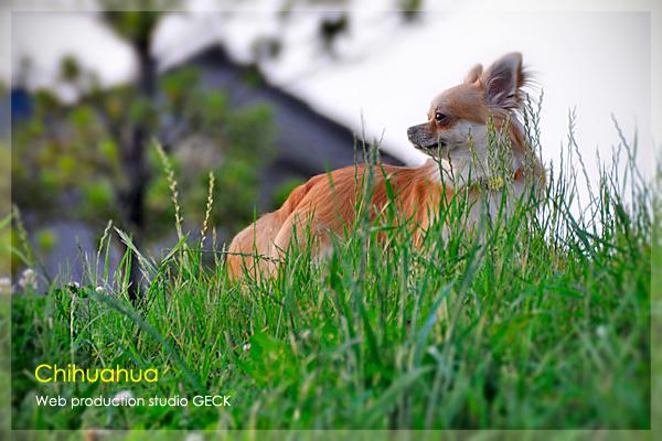 Byebye  Chihuahua ・・・ _d0147591_1411098.jpg