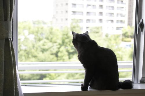 外を眺める小僧