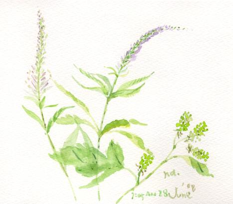 初夏の花 7_d0115092_8243793.jpg