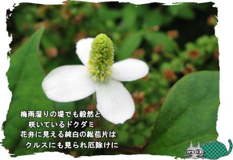 f0137096_19215187.jpg