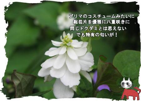 f0137096_19225655.jpg