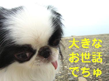 メロメロ、メロンちゃん_c0199014_10222939.jpg