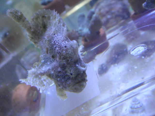 海水魚・サンゴ・水草・日本産淡水魚_f0189122_14432888.jpg