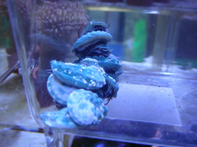 海水魚・サンゴ・水草・日本産淡水魚_f0189122_144486.jpg