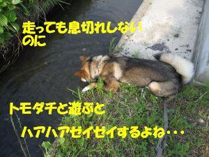 f0143123_20394624.jpg