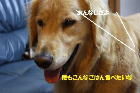 f0114128_210432.jpg