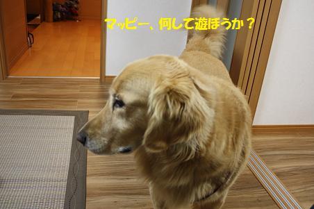 f0114128_2122933.jpg