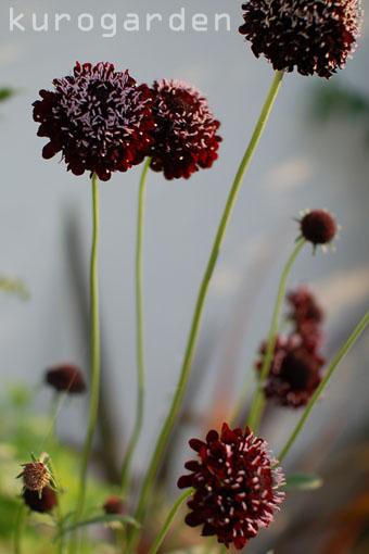 黒い花_e0119151_16332682.jpg
