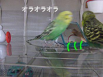 f0196665_032297.jpg