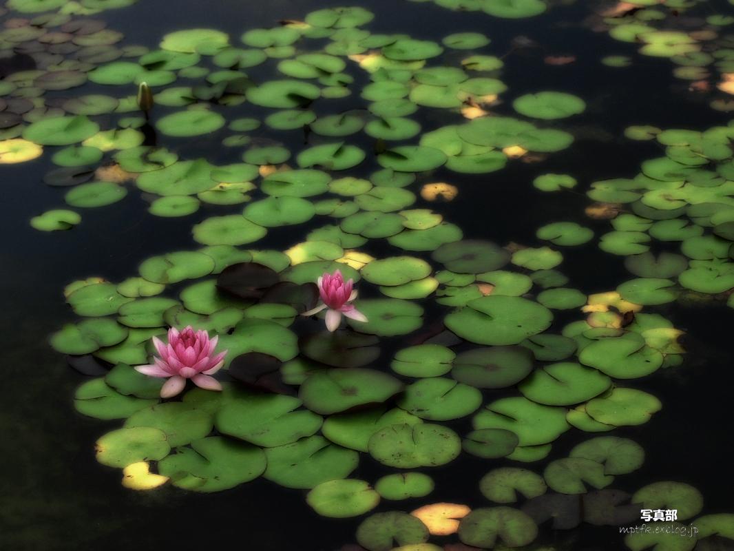滋賀 オフ会 水生植物公園みずの森 4_f0021869_20253665.jpg