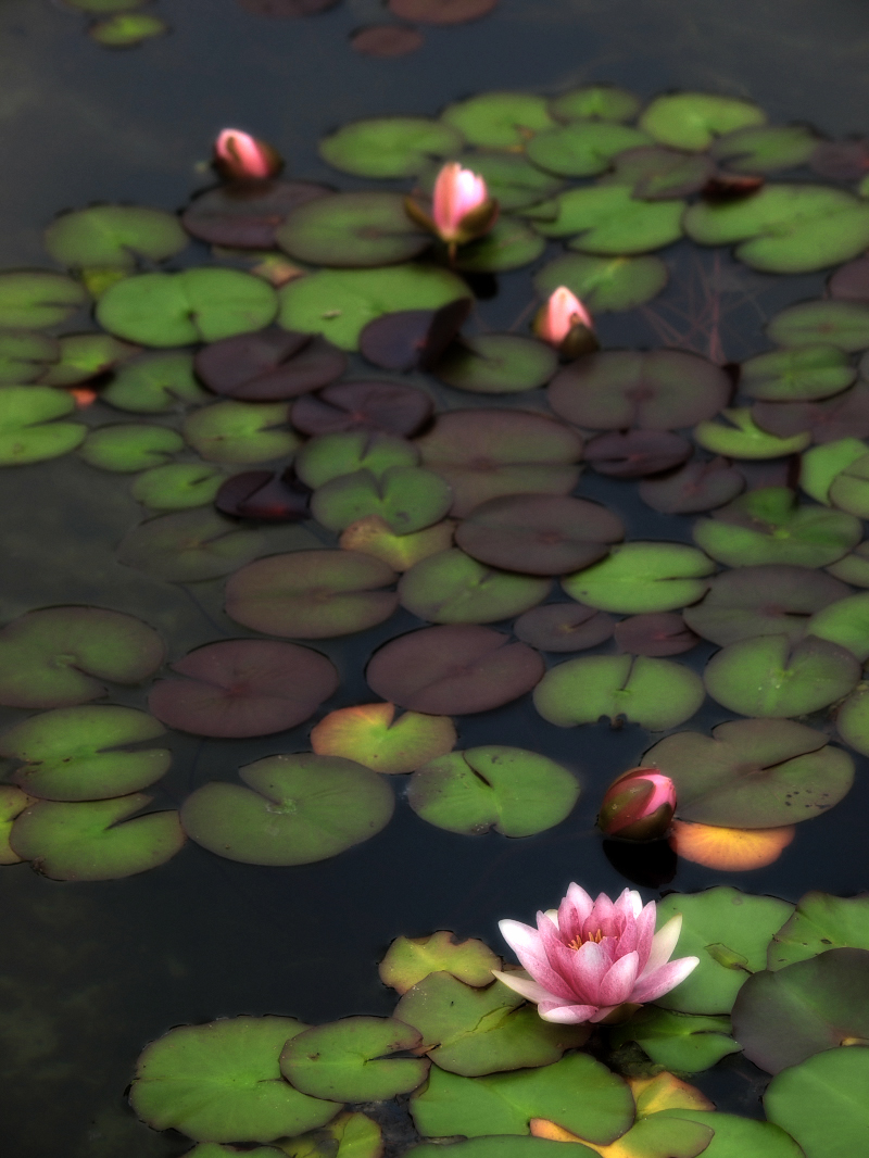 滋賀 オフ会 水生植物公園みずの森 4_f0021869_20265256.jpg