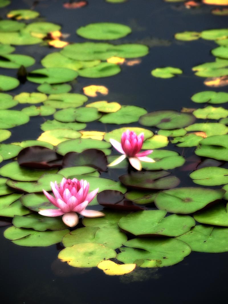 滋賀 オフ会 水生植物公園みずの森 4_f0021869_20282033.jpg