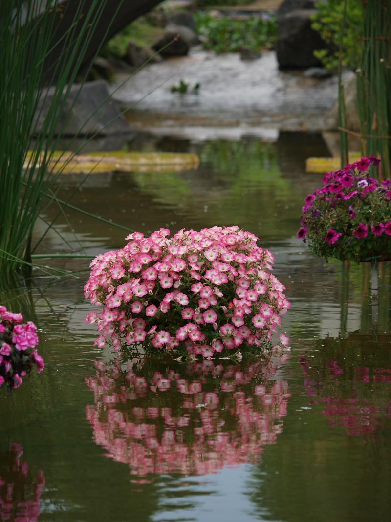 滋賀 オフ会 水生植物公園みずの森 4_f0021869_20321445.jpg
