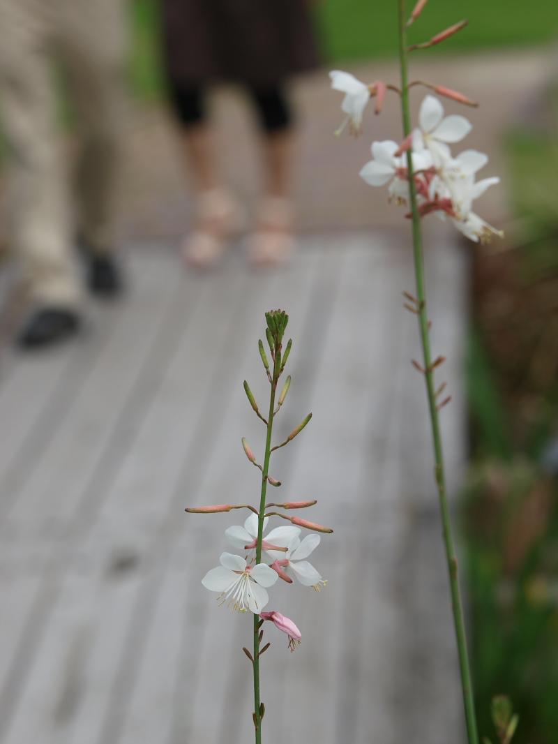 滋賀 オフ会 水生植物公園みずの森 4_f0021869_2033121.jpg