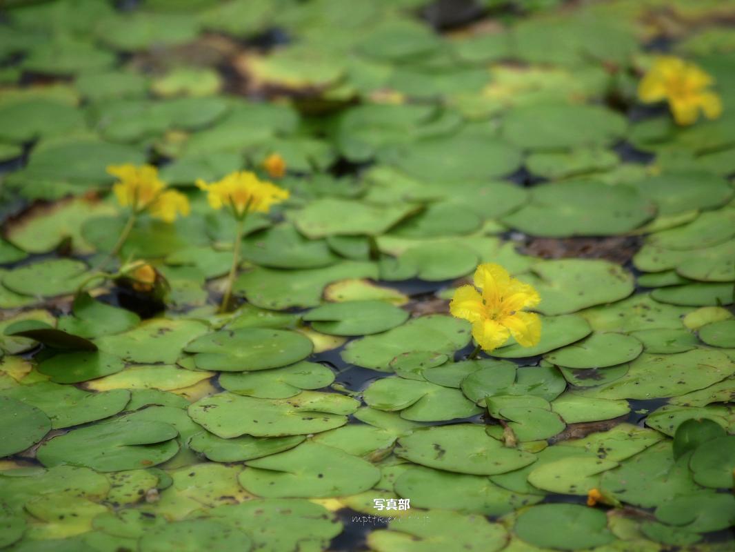 滋賀 オフ会 水生植物公園みずの森 5_f0021869_20431634.jpg