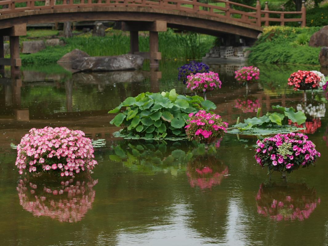 滋賀 オフ会 水生植物公園みずの森 5_f0021869_20442138.jpg