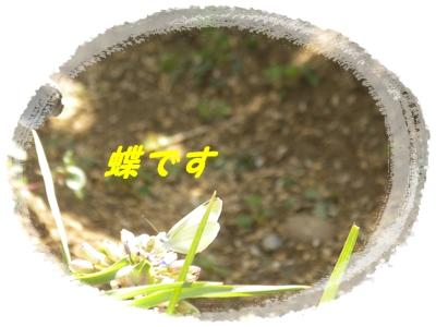 b0149071_2023067.jpg