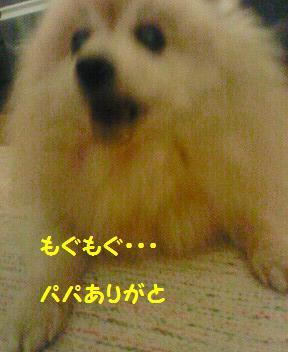 f0066289_2046395.jpg