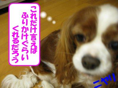 b0185323_16351469.jpg