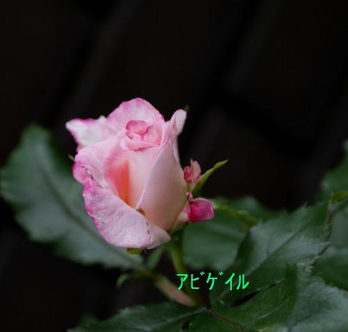 f0170524_15323953.jpg