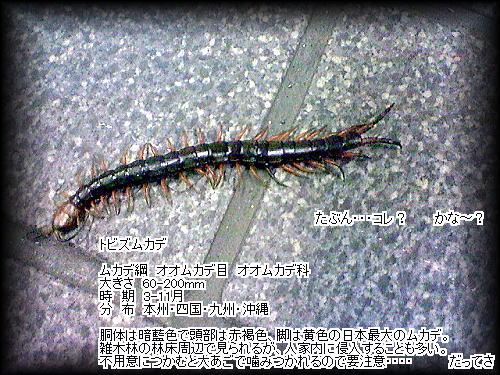 b0133126_16232676.jpg