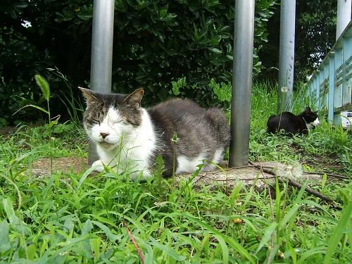 公園の猫_e0089232_19343249.jpg